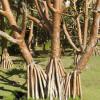 Vacoa - Pandanus utilis