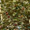Ziziphus mauritiana : Indian jujube