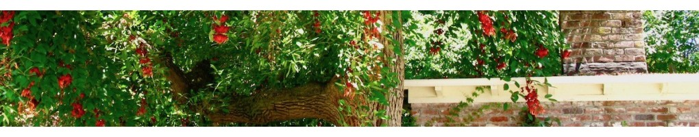 Exotic trees and plants for the garden