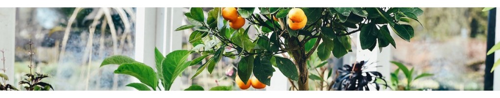Rare and remarkable tropical fruit trees and exotic shrubs